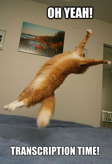 Cat jumping for joy