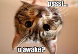 Cat Awake